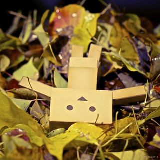 danbo is: not helping (again!)