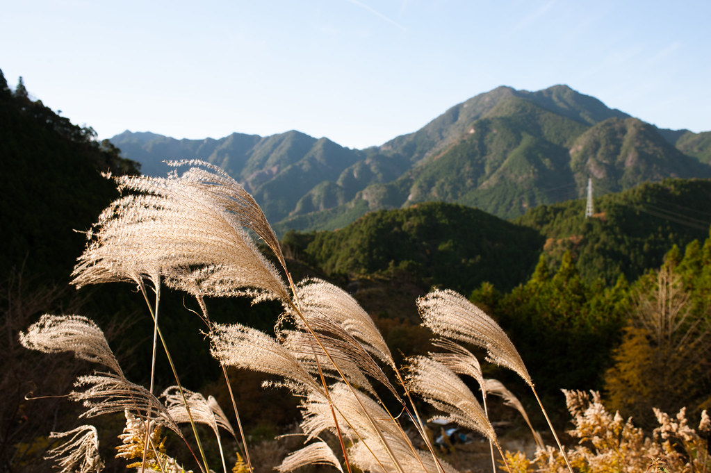 Maruyama teracced rice fields