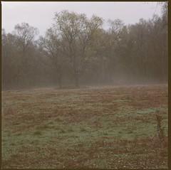 Autumn 2012 on Ashridge Estate caught on medium format film