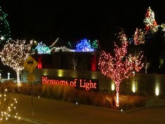 Welcome to Blossoms of Light