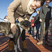 20121208_mac_dogdays_016