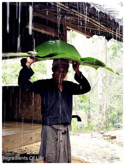 payung daun pisang