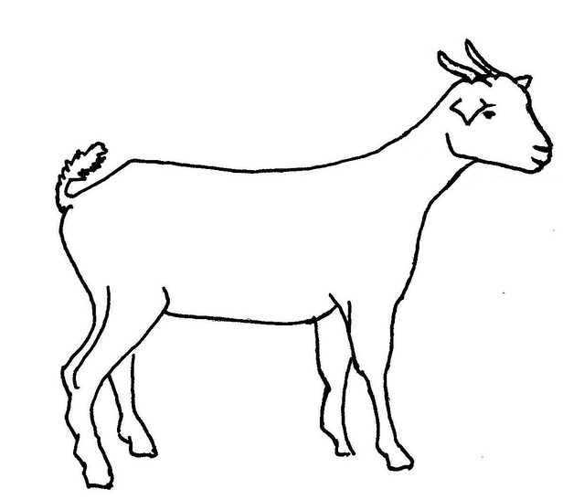line drawing of a goat flickr photo sharing