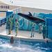 150216 Enoshima Aquarium-23.jpg