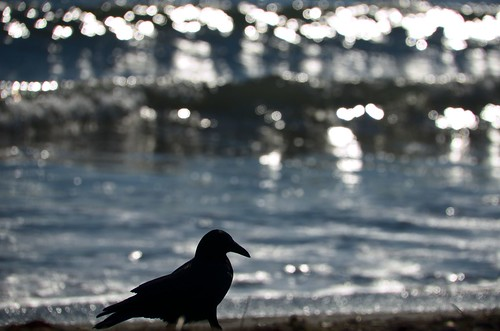 Crow and sea