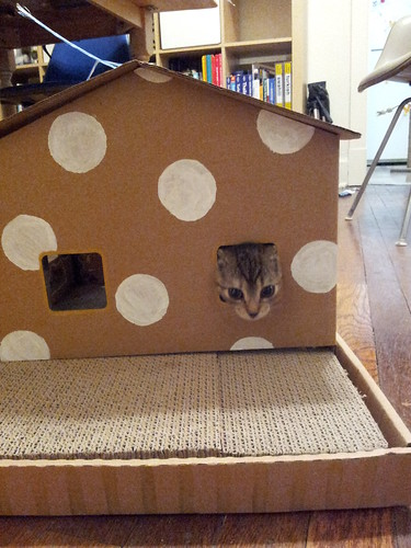 Dizzy's Polka Dot Cat House