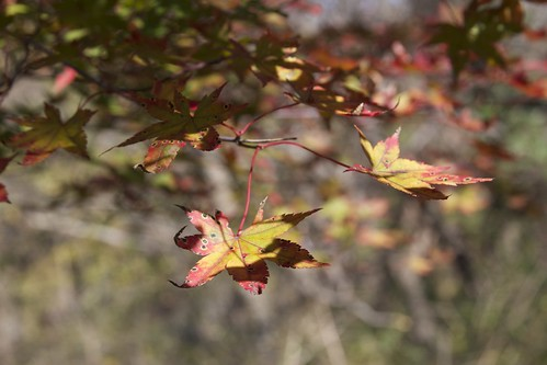 2012-11-02 절물 Jeolmul 5