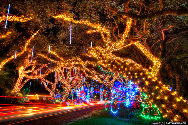 Live-Oaks-with-Christmas-Lights-on-Neighborhood-Street