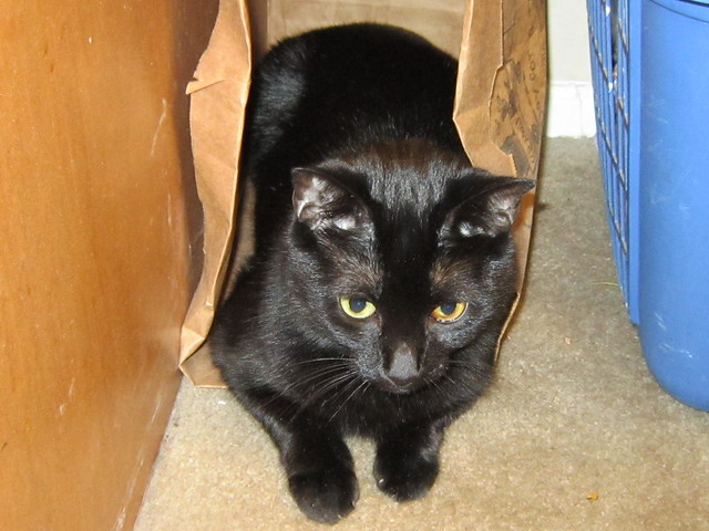Don't let the cat outta the bag