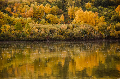 autumn canada colour reflection tree river saskatoon