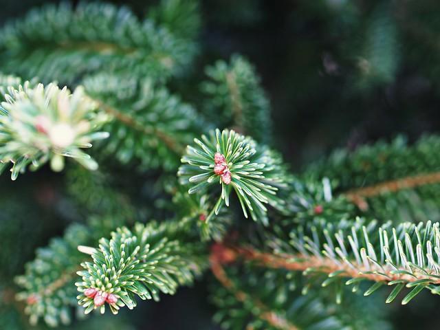 Bits of Christmas