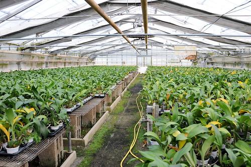 Greenhouses 03