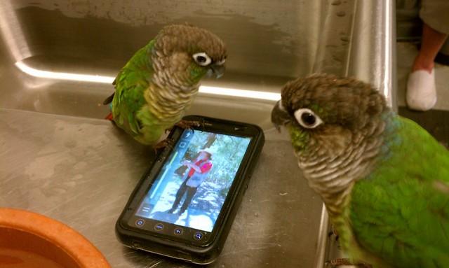 bakker birdies