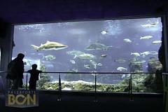 Aquàrium de Barcelona