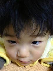 夜寝る前のとらちゃん 2012/12/22