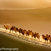 Desert Traveller (Explore 12-27-2012) by Feng Wei Photography (traveling - slow respone)