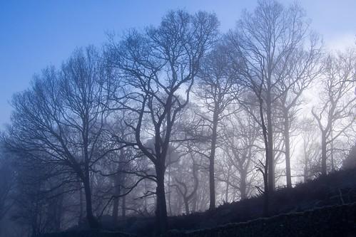 朝霧にけむる木々