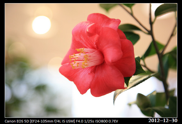 20121230_Flower33