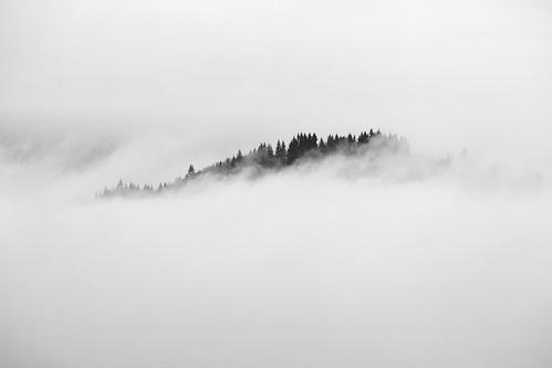 trees bw fog forest woodland washington wa canonef70200mmf28lisusm canonextenderef2xii canoneos5dmarkii canon5dmarkii