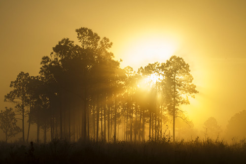 nature fog sunrise florida myakkariverstatepark gseloff