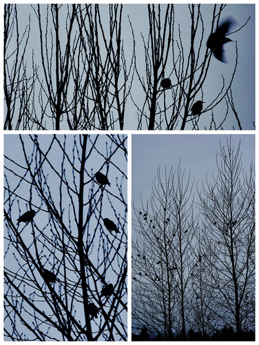 Wings-in-the-Poplars