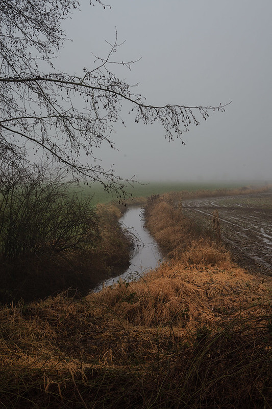 windy creek in the fog