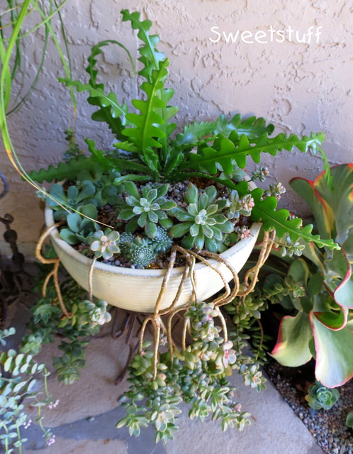 Zig zag plant and friends