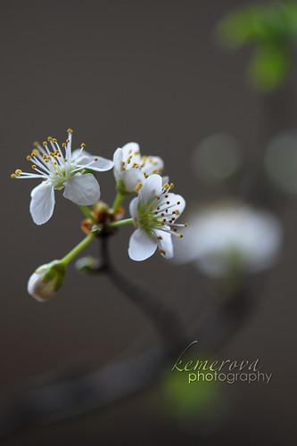 Spring time /08.03.2011