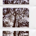 Tree on the Marsh - Instax Panorama by jasonepowell
