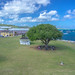 Christiansted's Meeting Tree