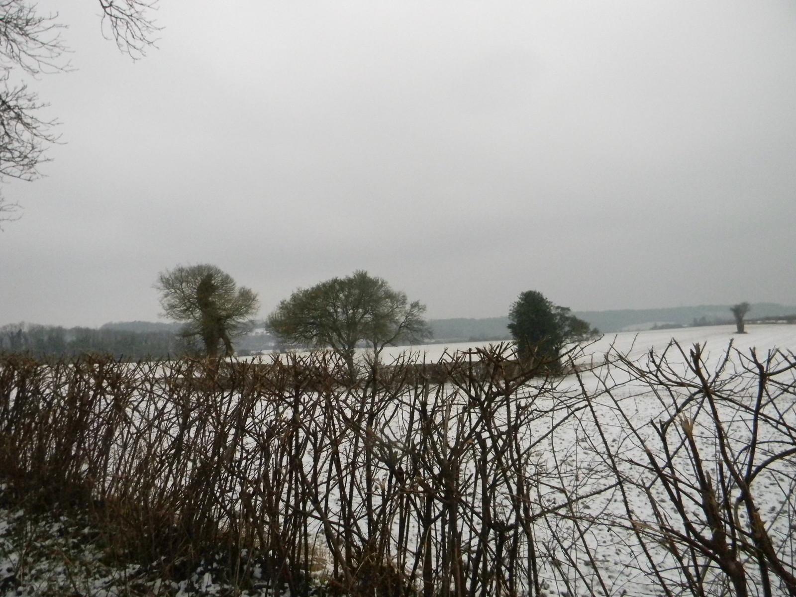 Snowy fields Snodland to Sole Street