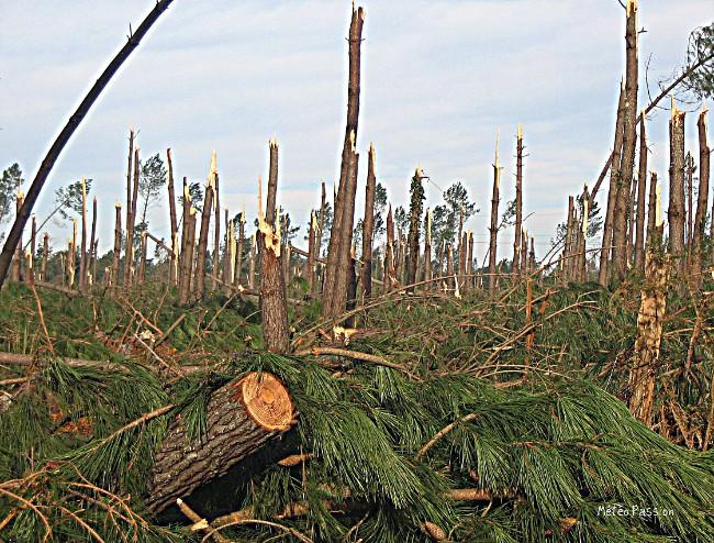 aspect de la forêt des Landes après le passage de la tempête Klaus du 24 janvier 2009 météopassion