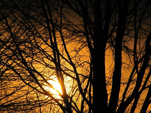 new sunset orange sun black tree colors silhouette canon photography photo colorful bright branches powershot jersey sx200is