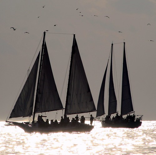 Six Sails & Seagulls