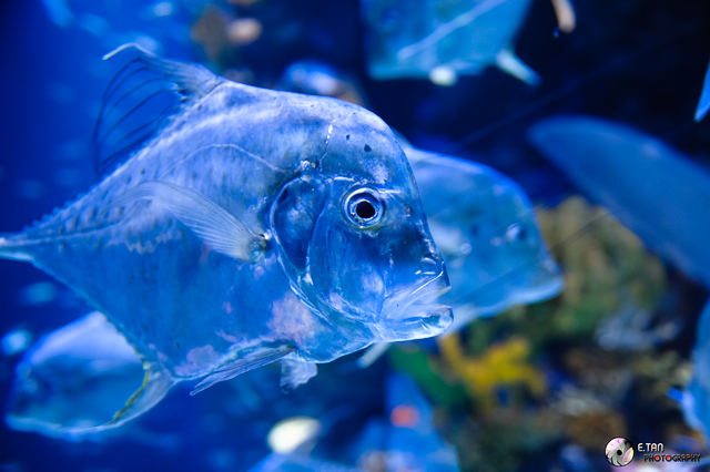 S.E.A Aquarium - 009