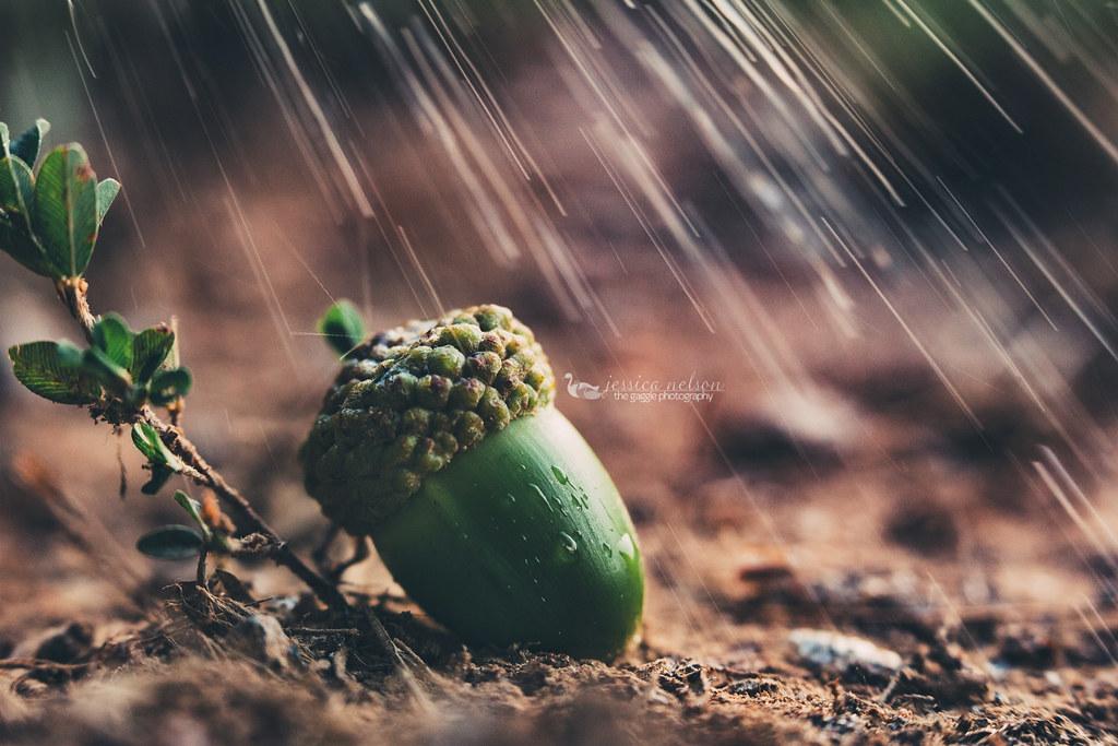 green acorn macro