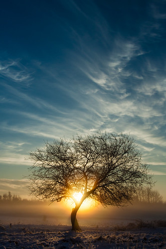 winter snow sunrise december sneeuw nederland zeeland 2012 uden noordbrabant maashorst winter2012