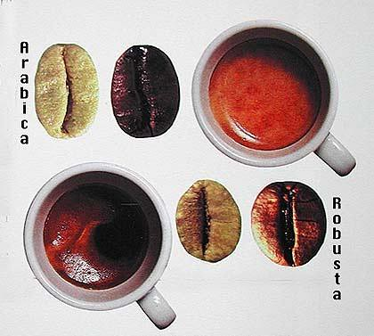 Arabica and Robusta are two major types of coffee beans.