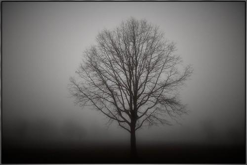 tree fog landscape solo