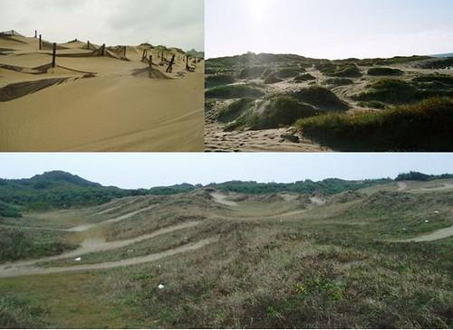 台灣海岸沙丘長達260公里,看似平凡的景色,實則蘊含多種生機