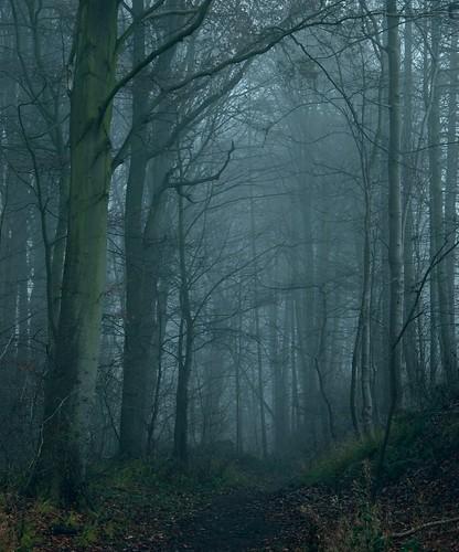 uk trees winter england mist nature forest woodland landscape woods nikon scenery northamptonshire 2012 d80 geddington mygearandme mygearandmepremium mygearandmebronze mygearandmesilver