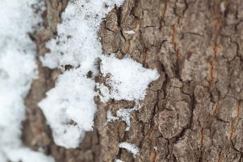 snö - 20121221 - 5