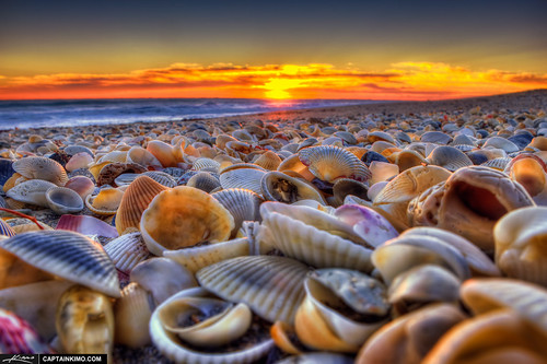 Seashells-at-Beach-During-Sunrise-Hutchinson-Island-Florida