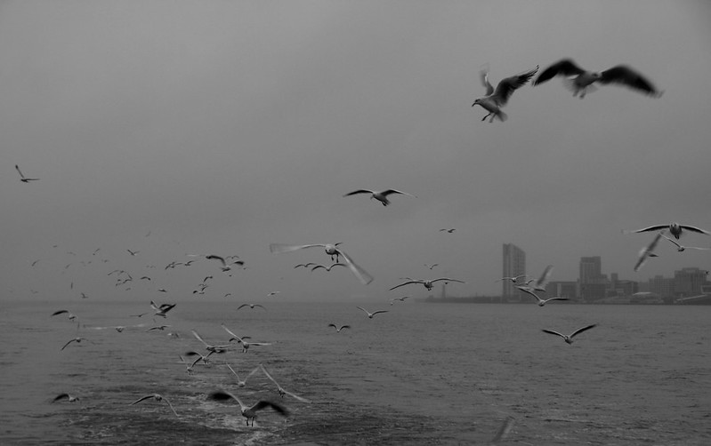 Seagulls, Liverpool, UK