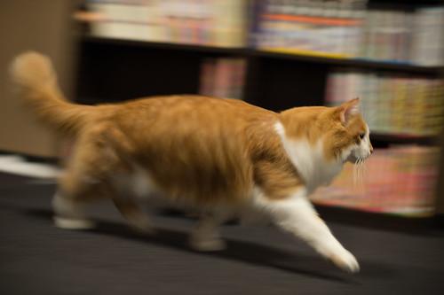 Panning of a cat - 無料写真検索fotoq