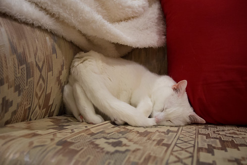 Snowflake's weird corner hogging sleeping position