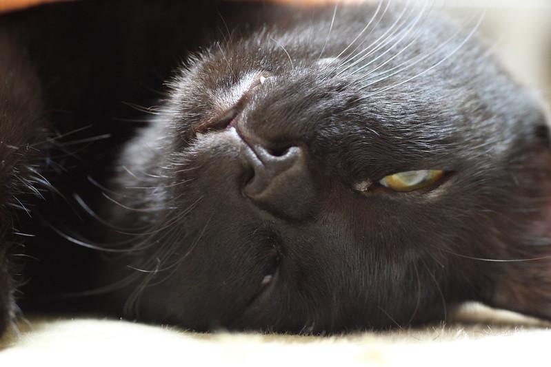 ブサイクな寝顔の黒猫