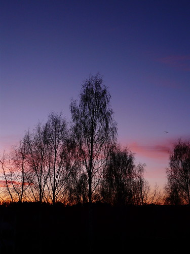 blue trees sunset sky silhouette clouds suomi finland colours