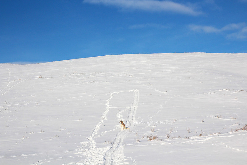 Go Sledding on our Mountain!