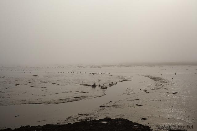 Pacific Ocean in the fog